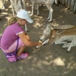 Marineland Animal Feeding