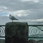 Seagal Picture in Niagara Falls