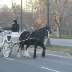 Carriages in Niagara Falls
