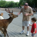 Playing with the Deer
