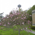Shot of Tree with Skylon Tower in the Background