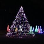 Tree Lights at the Winter Festival of Lights