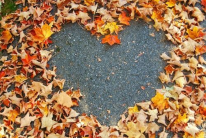 a heart symbol in the sidewalk made by fallen maple leaves.