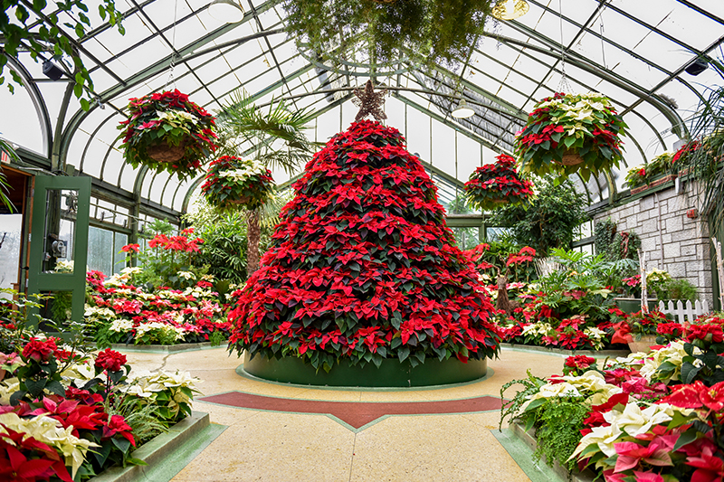 Annual Poinsettia Show