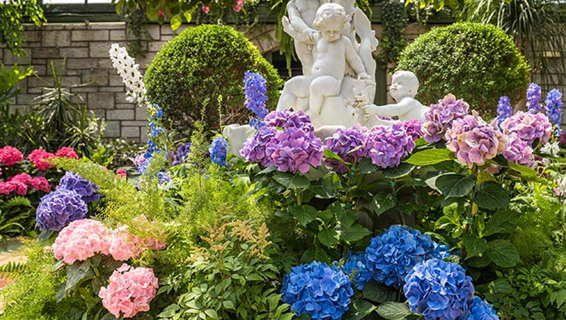 Hydrangeas at the Floral Showhouse