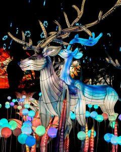 Reindeer display
